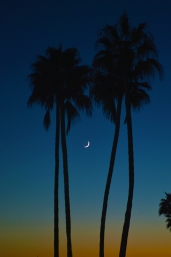 NC Village two palms and moon 800